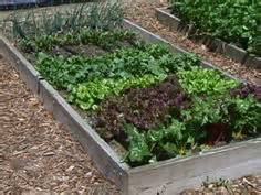 Vegetable Garden Mulch Ideas Mulches Gardening And Vegetable Gardening On