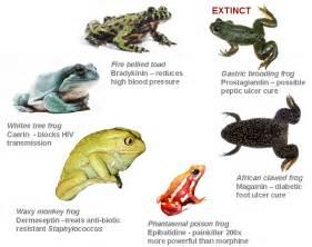 brian gratwicke amphibian rescue and conservation project