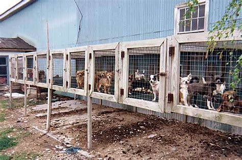 puppy mill pictures puppy mills protected paws