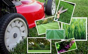 about us tropilawn landscaping
