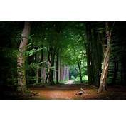 Nature Landscape Fairy Tale Path Forest Tunnel Trees
