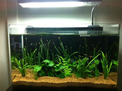 feng shui fish tank in bedroom fish tank in bedroom feng shui 28 images feng shui for