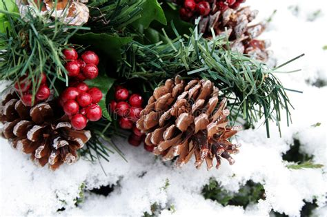 4 ft cone berry snow tip tree pine cones in snow royalty free stock images image 3676189