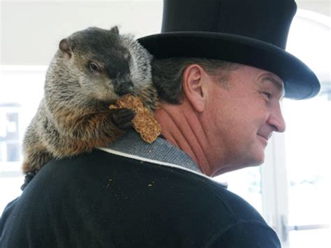 groundhog day how many days did it last the story of punxsutawney phil news tapinto