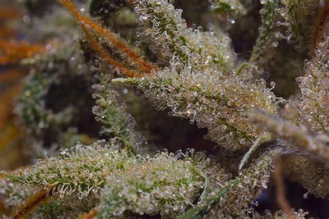 le uv cannabis comment trouver le hash d un compte