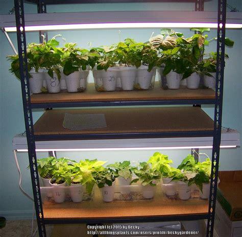 Shelf Garden by Create Your Own Grow Light Shelving Unit Garden Org