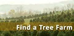 wholesale christmas trees nh vt christmas tree association