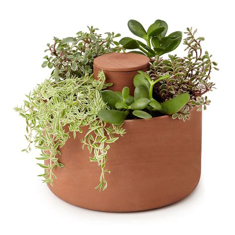 succulent planters self watering herb and succulent planter the green