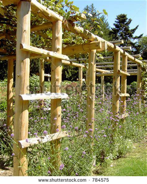 trellis gardens stylish garden trellises for your garden