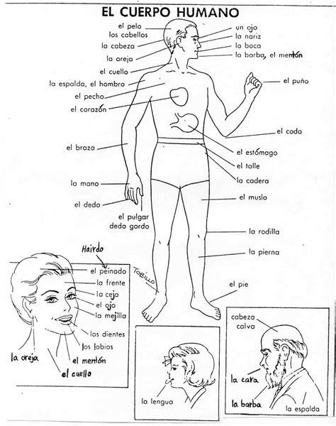 imagenes asombrosas del cuerpo humano cuerpo humano dibujo del cuerpo humano para colorear