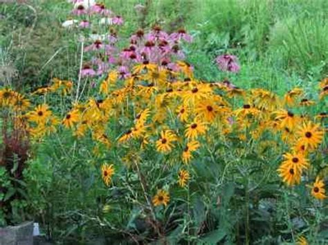 best sun loving perennials for clay soil outside inspiration pint