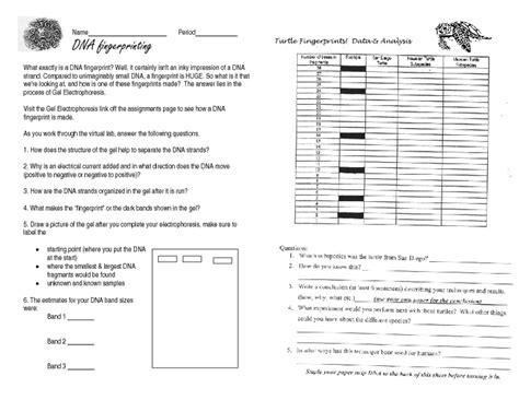 Gel Electrophoresis Worksheet by Worksheets Gel Electrophoresis Worksheet Opossumsoft