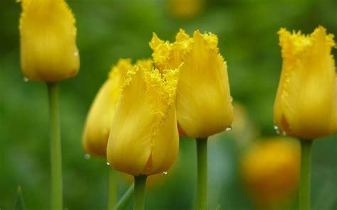 imagenes flores amarillas flores amarillas en hd yellow flowers fotos e im 225 genes