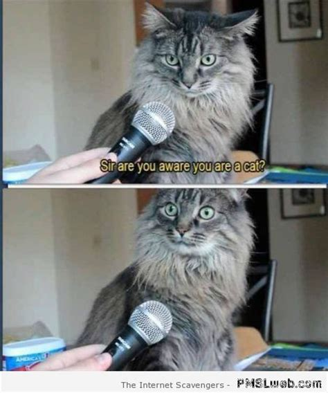 cat and memes 20 hilarious cat meme pmslweb