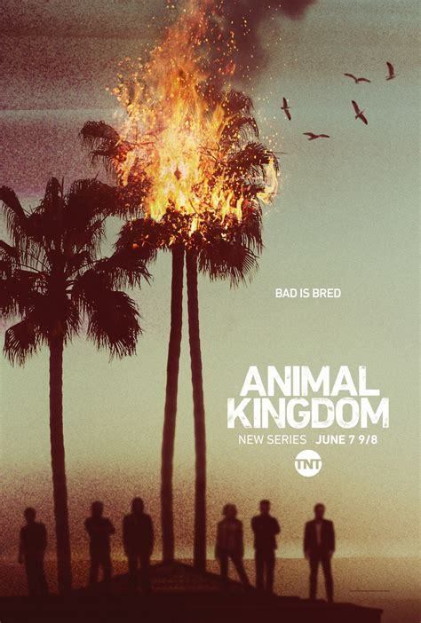 animal kingdom s 233 rie tv 2016 allocin 233