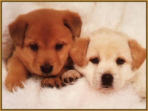 imagenes tiernas de perritos 38 cautivadoras imagenes de cachorros de perritos
