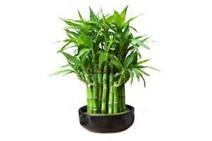 le bambou un c 244 t 233 naturel dans la d 233 coration de