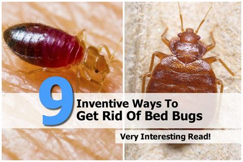 how to get rid of bed bug bites scars 9 inventive ways to get rid of bed bugs