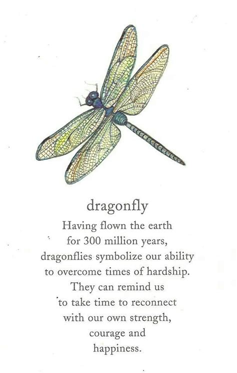 meaning of dragon tattoo dragonfly poems and quotes quotesgram