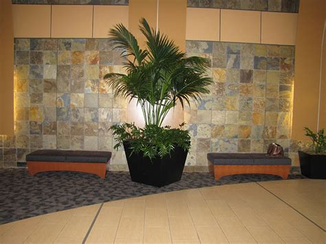 plants for lobbies plants for offices courtyards and patios