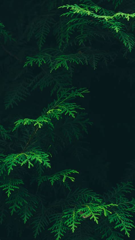 wallpaper iphone 7 green for iphone x iphonexpapers