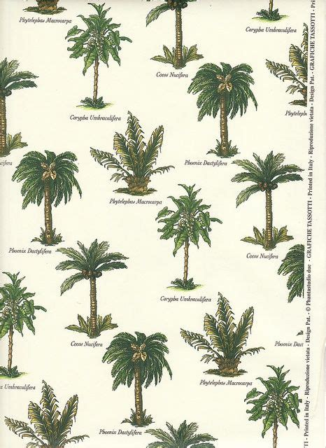 type of tree 25 best ideas about palm tree types on pinterest small