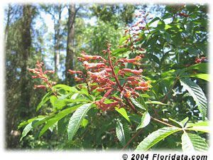 ls that look like trees 17 best images about fl hummer attractors on