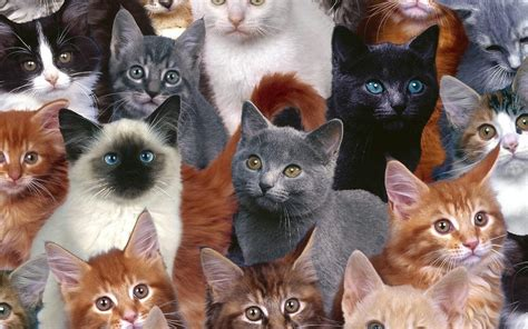cat wallpaper collage cute kittens kittens wallpaper 16096024 fanpop