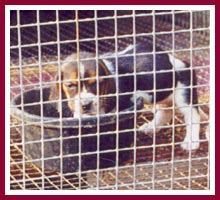 puppy mills in wisconsin wisconsin puppy mill project inc frequently asked questions from students
