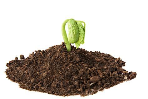 Nice Summer Garden Vegetables #3: New-sprout-in-dirt.jpg