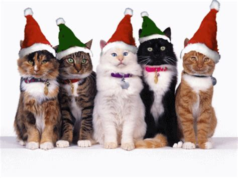 christmas animals animated animated gif collection 33 gifs