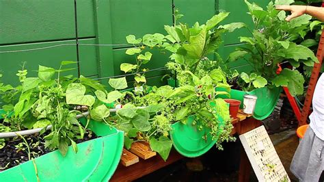 how to build your own hydroponic vegetable garden