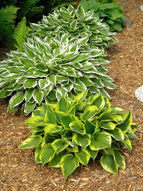 9 shade loving plants shorewest latest news our blog