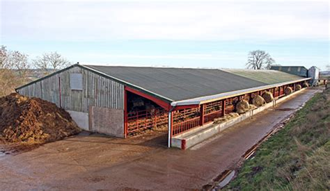 photos: farmer houses beef cattle in poultry sheds