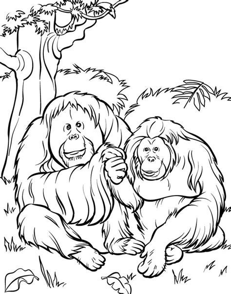 zoo coloring pages printable top 25 free printable zoo coloring pages online coloring