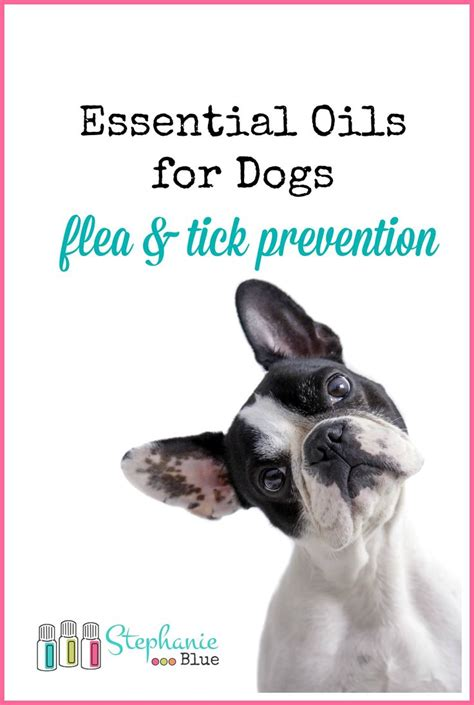 essential oils for dogs 45 best images about essential oils on diffusers shower bombs and sprays