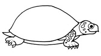 color of turtles coloring pages turtles free printable coloring pages