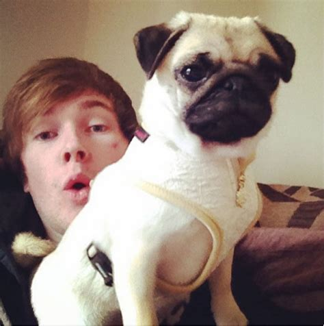 dantdm pugs gallery dantdm s pug youtuber review