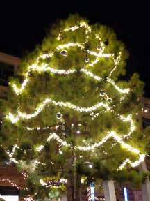 outdoor christmas tree with lighted garlands picture