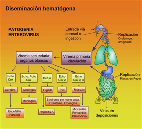 cadena epidemiologica meningitis meningitis todo lo q querias saber taringa