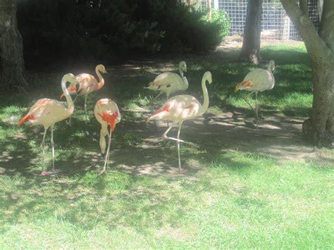 Garden City Zoo Ks File Flamingos At Richardson Zoo Garden City Ks Img