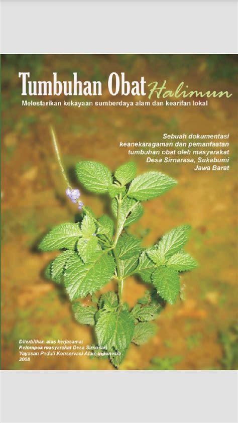 Obat Herbal U Sakit Maag buku tanaman obat herbal tradisional tugas sekolah