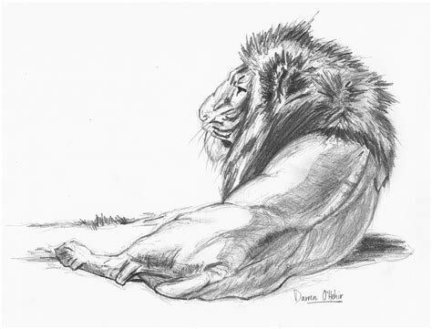 7 Drawing Pencil by Pin Pencil Drawing Painting Sketches Of Animal