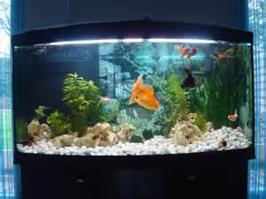 id 233 e d 233 coration aquarium poisson japonais