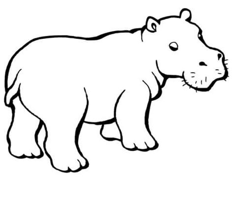what color are hippos coloriage b 233 b 233 hippopotame coloriages 224 imprimer gratuits