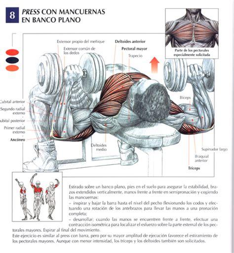 bench press muscle groups ejercicios pectorales fotos musculaci 243 n y pesas