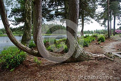 tree curve towards stock photos tree curve towards stock images alamy curved tree stock photo image 54120301