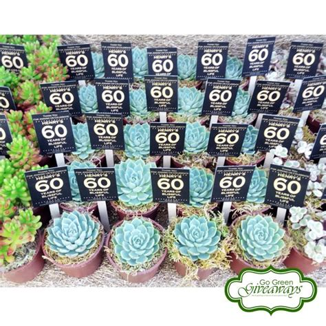 Birthday Giveaways Ideas Philippines - 1000 images about succulents giveaways for henry s 60th birthday bacolod