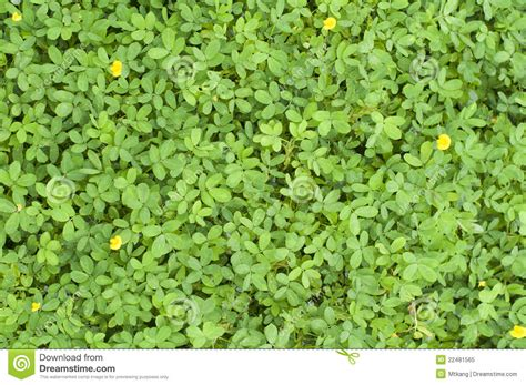 tiny plants plants texture with tiny leaves stock image image 22481565