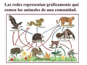 cadena alimenticia acuatica y terrestre wikipedia cadena alimenticia